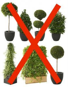 restaurant magic plants